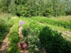 Champs plantes aromatiques