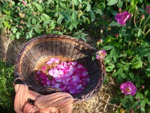 Panier pétales roses sauvages