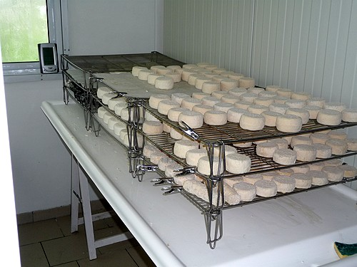 Fromages de chevre sechage