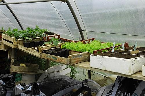 Serre semis et plants : détail
