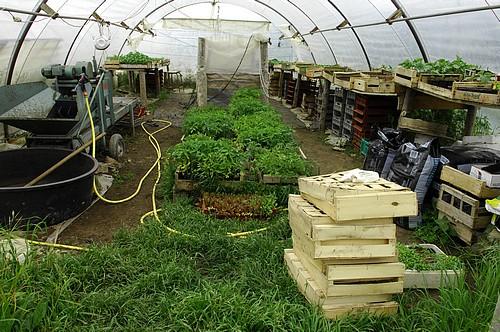 Serre semis et plants : vue générale